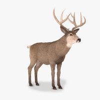 mule buck fur 3D model