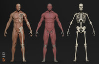 MALE ecorche +Human Figure + Man base mesh + Character