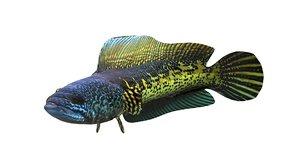 fish sneakhead model