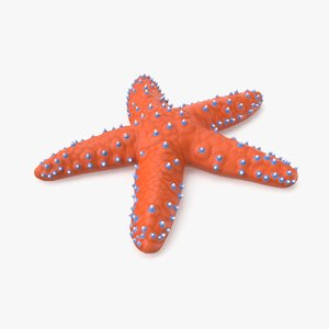 3D knobby starfish pbr model