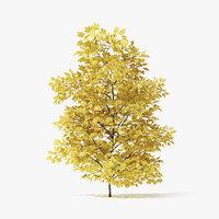 autumn norway maple tree 3D model