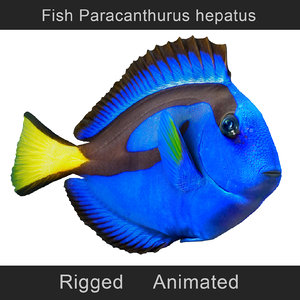 fish paracanthurus hepatus animation model