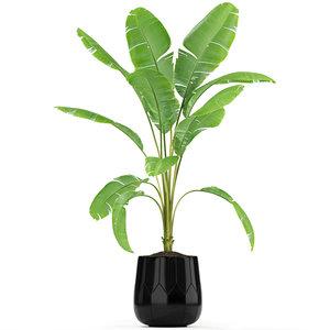 3D plants 185