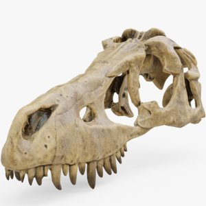 3D dino skull dinosaur model