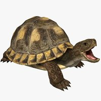 3D turtle animal model