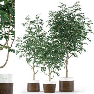 plants 205 3D model