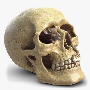 skull moneybox max