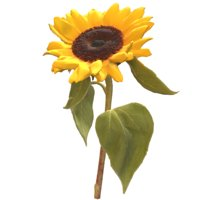 3D sunflower sun flower
