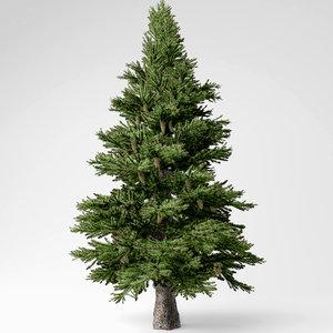 3D spruce tree model