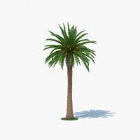 date palm 3D model