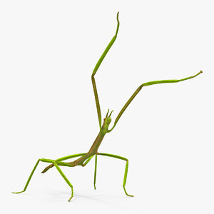 phasmatodea stick insect attack model