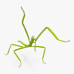 3D stick insect green attack
