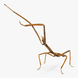 stick insect brown attack model