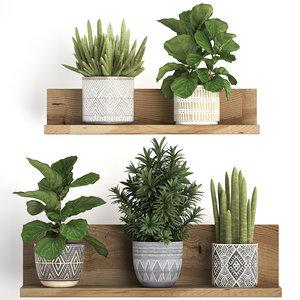3D model houseplants exotic plants