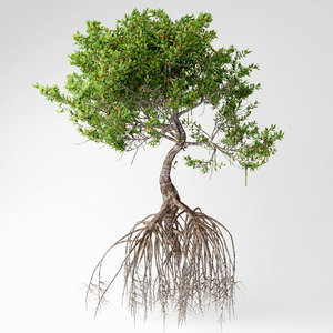 mangrove tree model