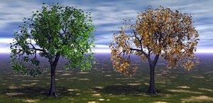 maple tree model