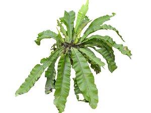 tropical plants scan 8k 3D