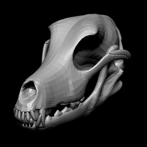 3D model dog skull anatomy base mesh