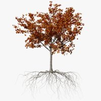 3D maple autumn 3 tree bark model