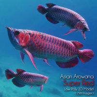 Asian Arowana Super Red