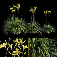 yellow hemerocallis model