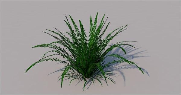 fern grass 3D