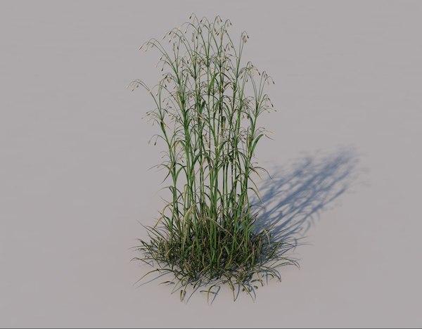 hairy brome grass 3D model