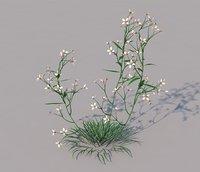 Prairie Blue Grass