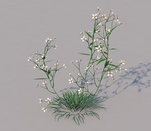 3D prairie blue grass model
