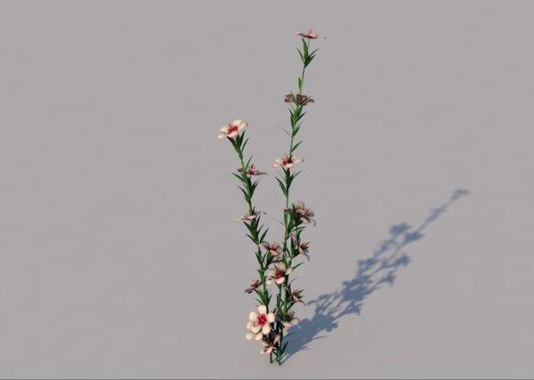 atkinsiana flower 3D model