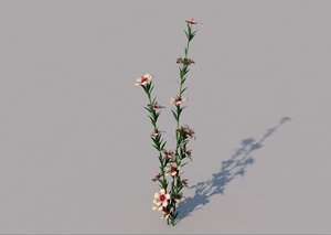 atkinsiana flower 3D model