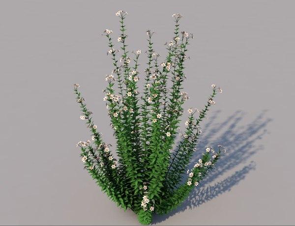 3D capitatus flower model