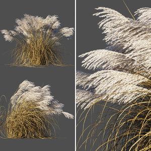miscanthus sinensis plant grass 3D