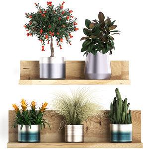 3D exotic plants