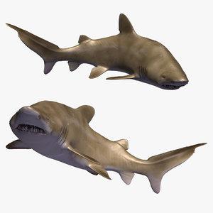 3D model sand tiger shark animal