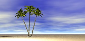 3D palm tree coconut model