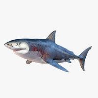 Great White Shark Full Anatomy