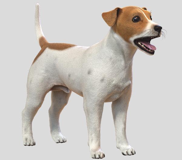 3D jack russell dog fur