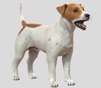3D, Jack Russell, Dog, fur