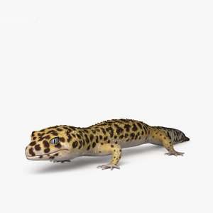 3D model common leopard gecko