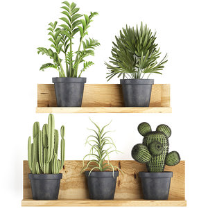 3D model houseplants exotic plants