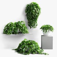 plants set 12 model