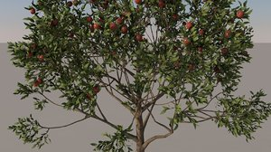 3D apple tree model