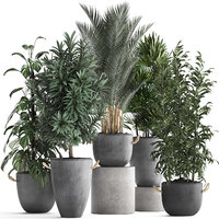 Collection of Exotic Plants 413