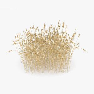 wheat field 3D model