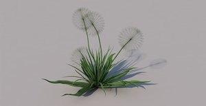 3D flower dandelion white