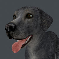 ANML-026 Dog Animated