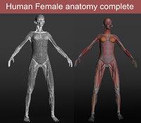 female anatomy human 3D