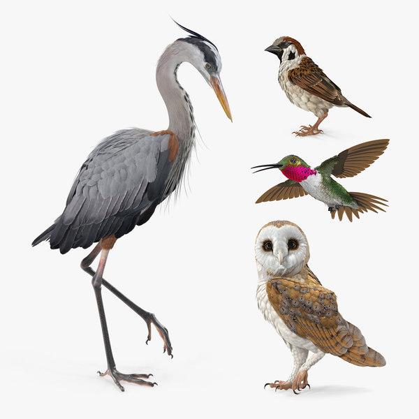3D birds grey heron