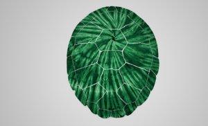 turtle shell model